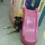 Enjoying Doggie Daycare