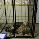 Dogs boarding at Fun Fur Pets
