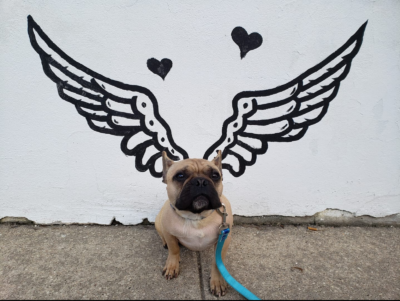 Dog posing with angel wings at Fun Fur Pets