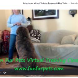 Virtual Dog Training Classes